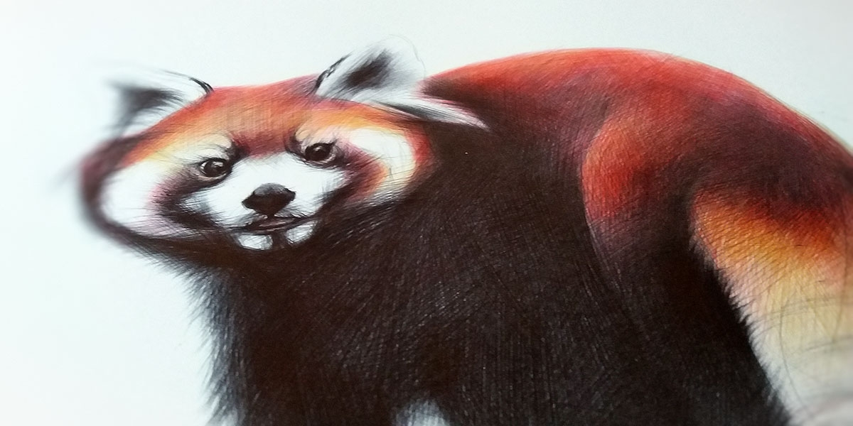 09-Red-Panda-Yelena-Yefimova-Animals-Drawn-with-Ballpoint-Pens-www-designstack-co