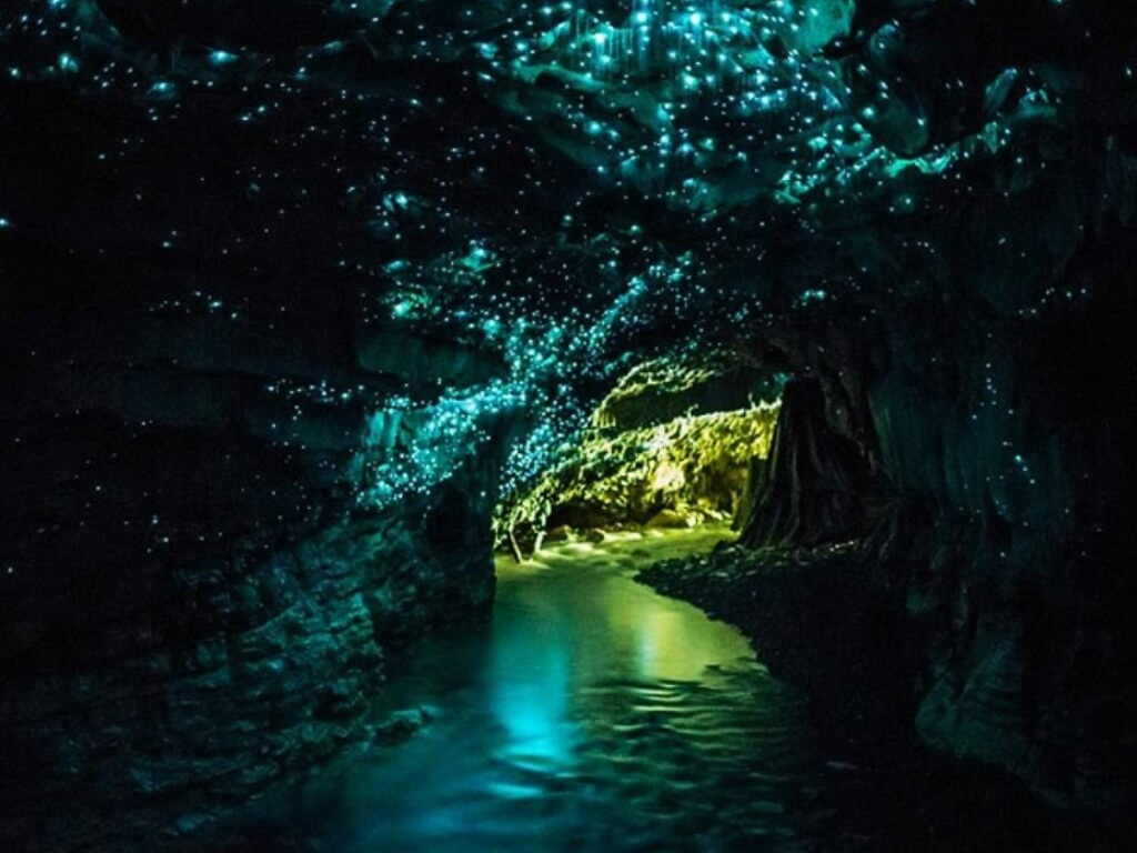 Glowing Worn Cave, Waitomo