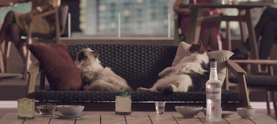 Canzone Molinari Pubblicità EXTRA Sambuca, Spot 2017 gatti su divano