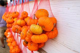 mini-pumpkins-tapiabrosfarm-t1dlife
