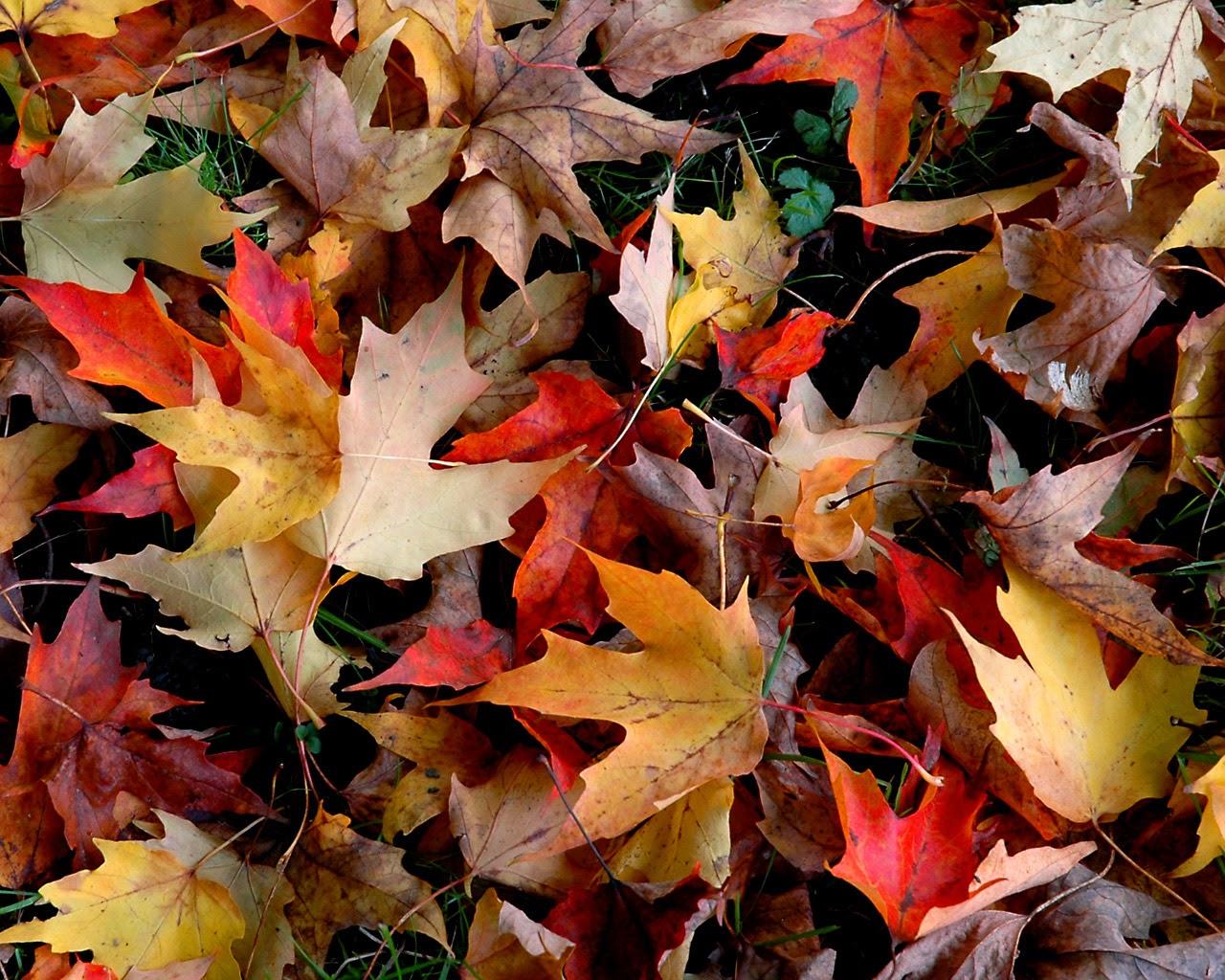 Free Autumn Wallpaper For Desktop