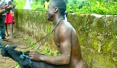 Man caught having sex with a goat in Ogun