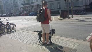 Σκύλος οδηγός με συνοδό του ελέγχει για να περάσει το δρόμο