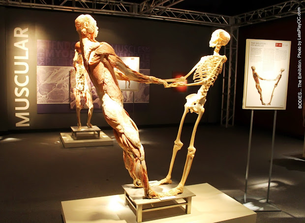 Bodies. Exhibition 'll Stop