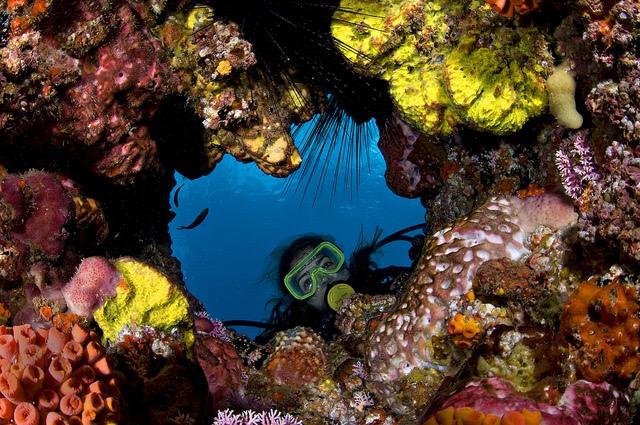 Gobierno estimula y participa en la protección de nuestras especies costeros-marinas: