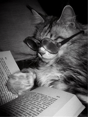 Cool cat reading book