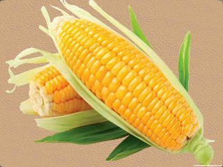 Corn images wallpaper
