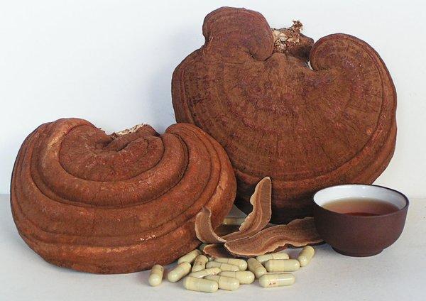 sử dụng nấm linh chi và tam thất chăm sóc sức khỏe