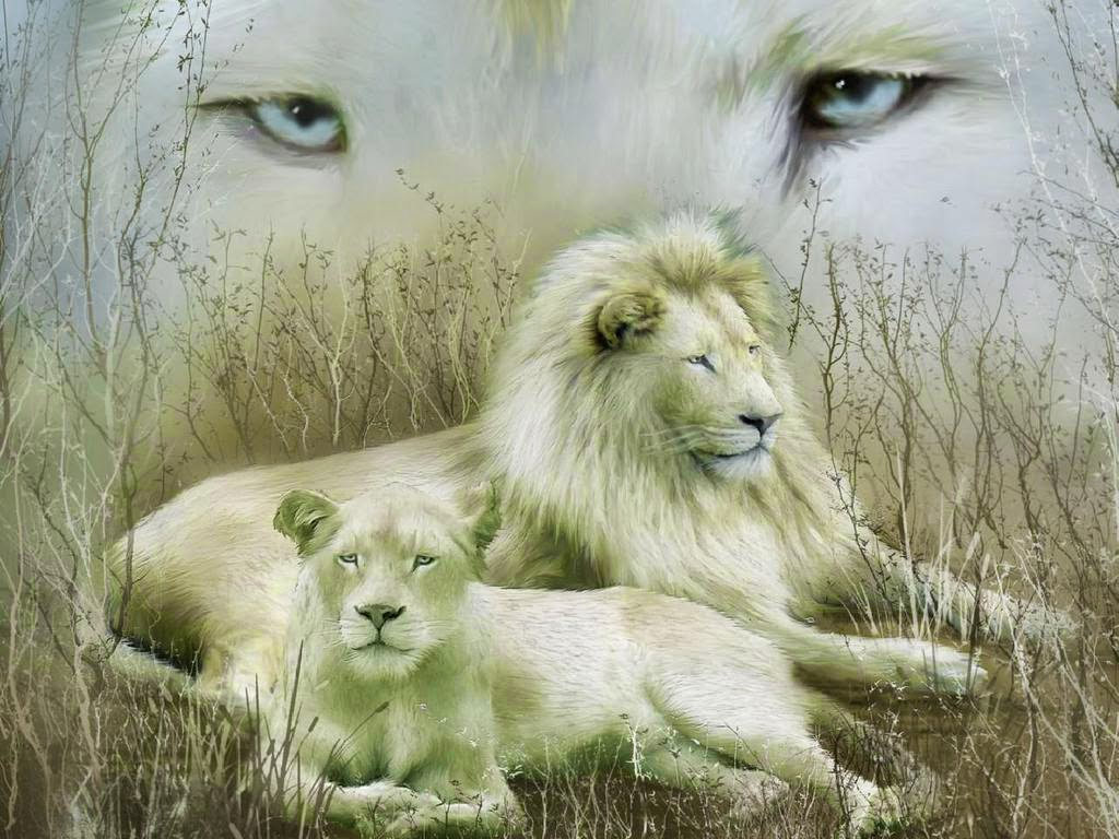 Lovable Images: White Lion Hd Wallpaper Free Download ...