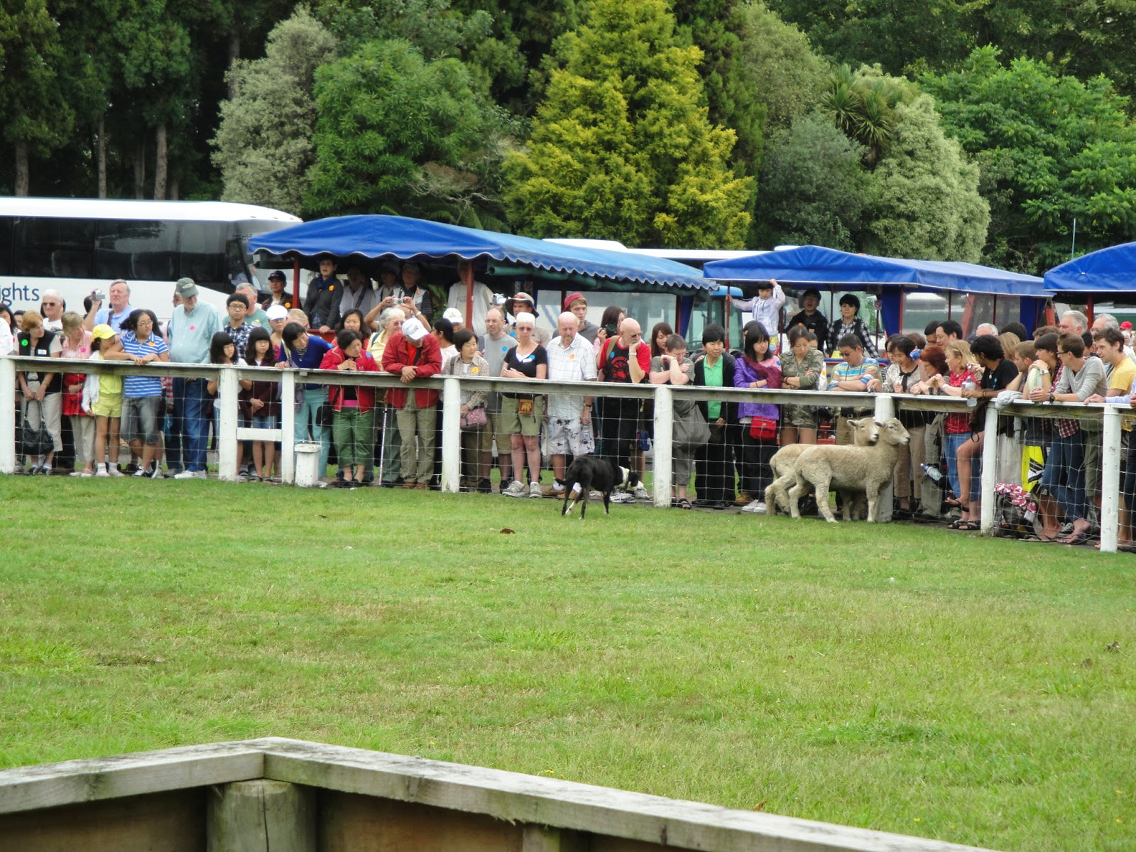 Hymark High Spots The Sheep And The Goats