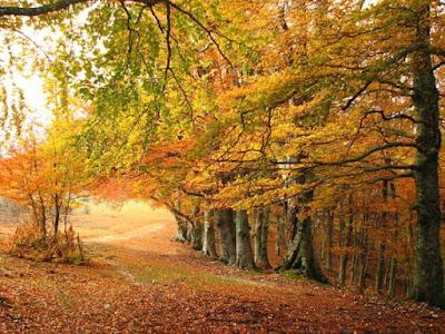 Árbol Mágico: La Haya