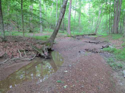 nearly dry stream bed