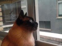 Almas gemelas, un felino para una gatomaquia (frugal homenaje a Lope de Vega), Francisco Acuyo