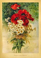 Poppies and Daisies / Birthday Greeting Cards