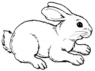 Realistic Rabbit Coloring Sheet Ideas Images