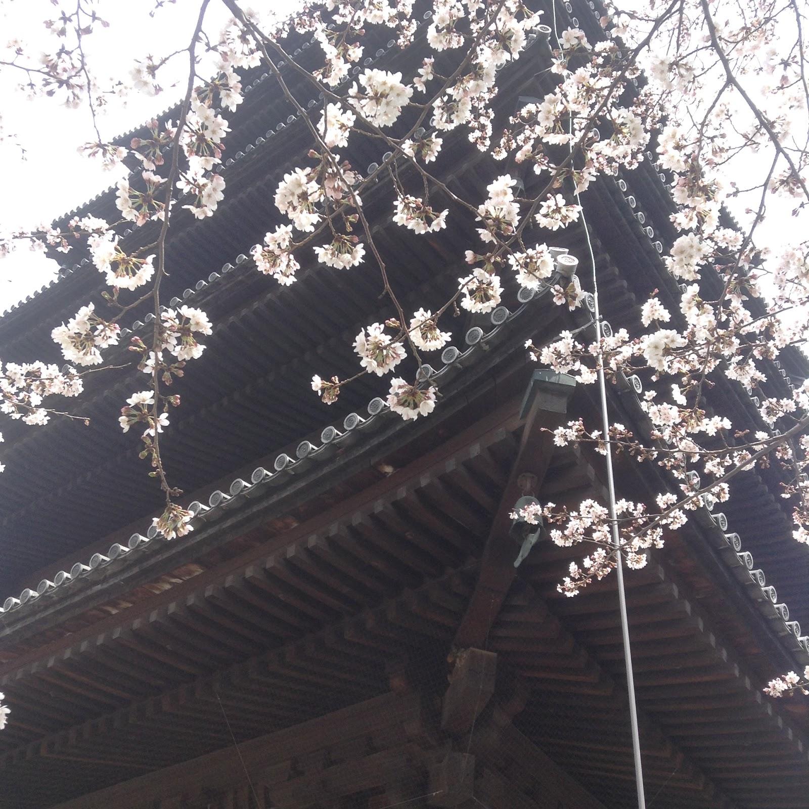 Toji Sakura Kyoto