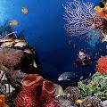Panduan Wisata Bunaken Wisata Bawah Laut terbaik