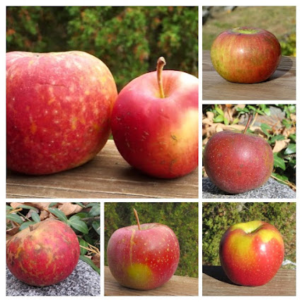 A collage of apples