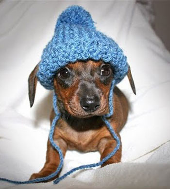 Really Funny Pictures Adorable Animals In Hats