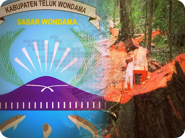 Pencurian Kayu di Kabupaten Teluk Wondama Masih Marak