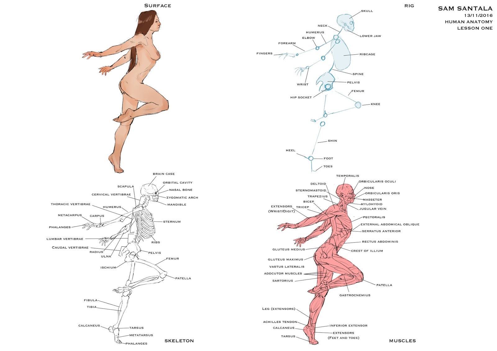 Magnificent Positive Feedback Anatomy Pictures - Physiology Of Human ...