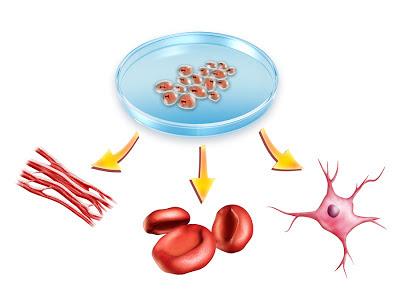 สเต็มเซลล์ (Stem Cell) หลุมสิว