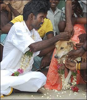 selva kumar yang menikah dengan seekor anjing