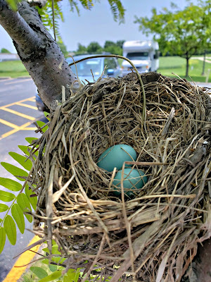 May 23, 2018 Finding this beautiful nest beside our parking spot