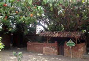 Pohon Soka dan Sumur Beracun di Keraton Kasepuhan Cirebon