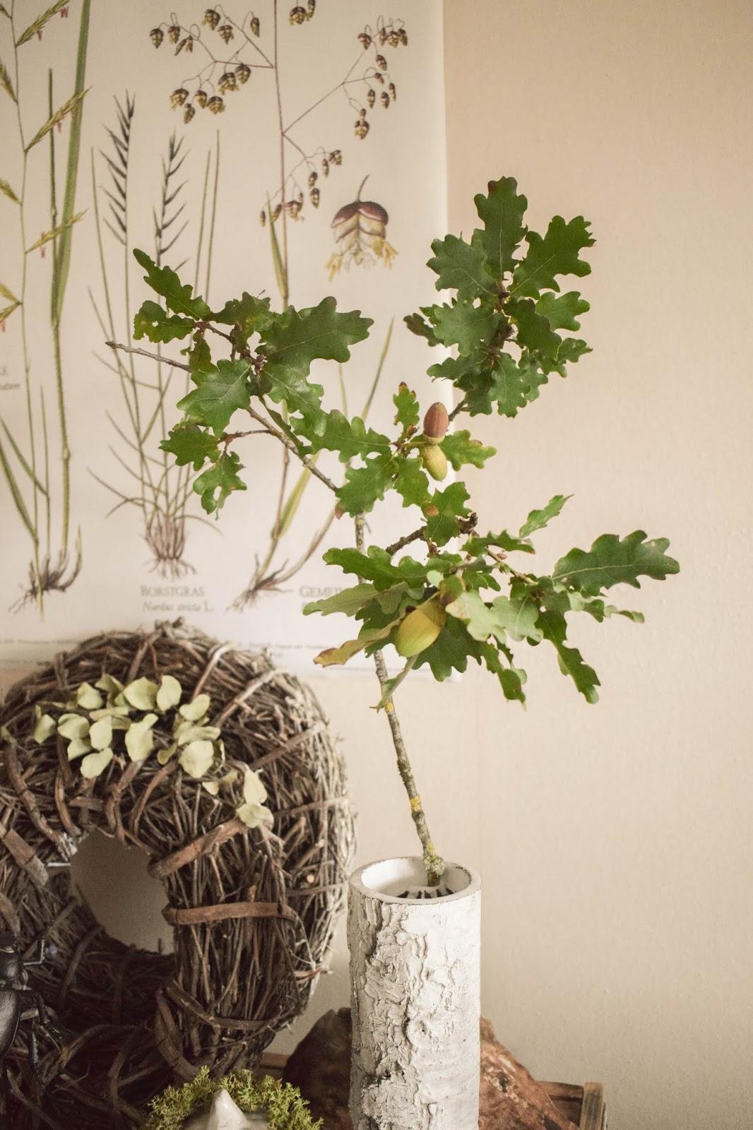 Deko Herbst für Konsole und Sideboard mit Eicheln. Herbstdeko Dekoidee Wohnzimmer Dekoration eiche eicheln botanisch natuerlich dekorieren 3
