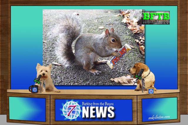 BFTB NETWoof News reports of squirrel thieves