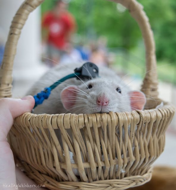 Oliver in a basket at berry college