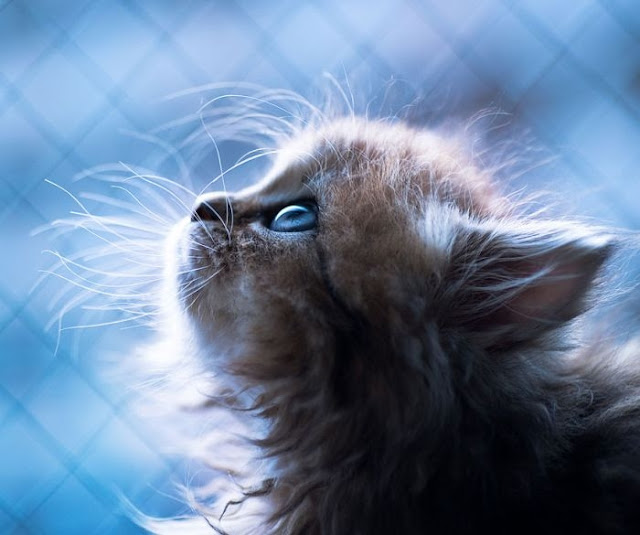 Beautiful Kitten Wallpapers