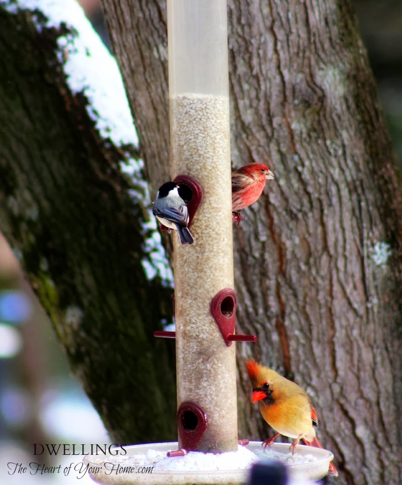 Wild Birds Back Yard: DWELLINGS-The Heart Of Your Home
