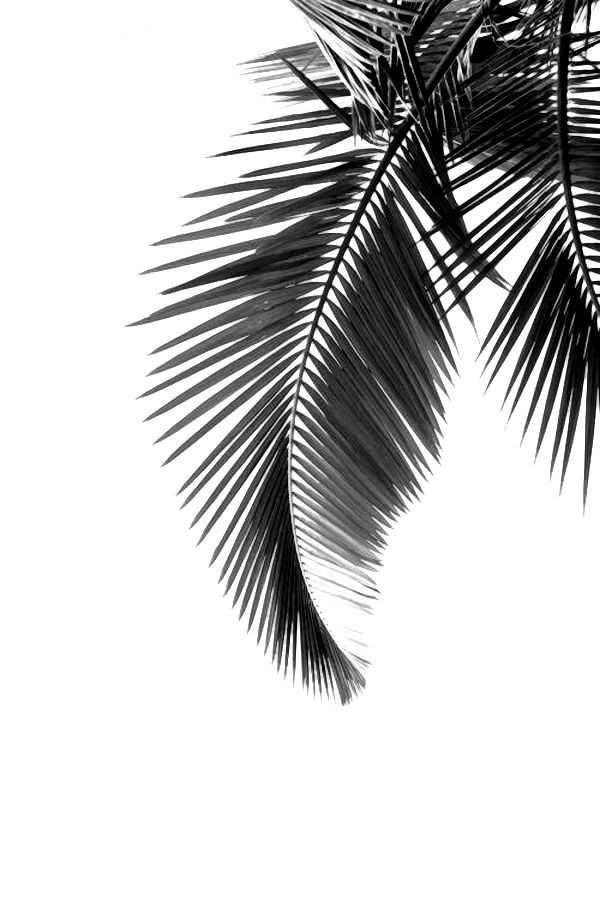 Palm tree - UK lifestyle and travel blog