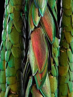 Les couleurs d'Amazonie