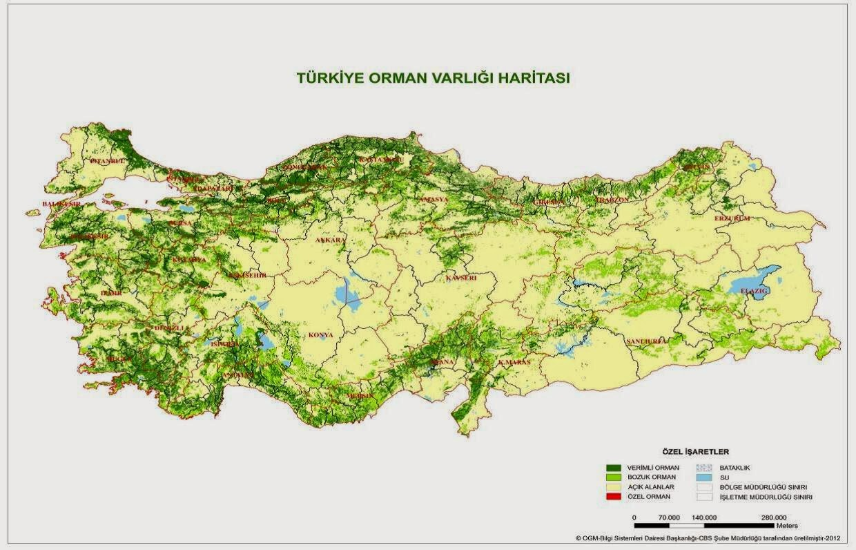 türkiye'de orman varlığı