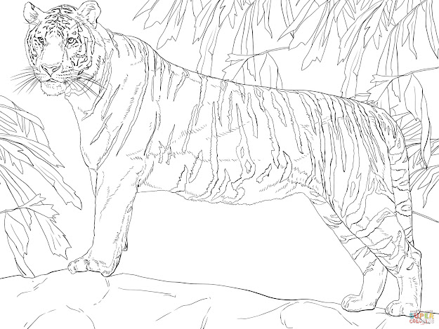 Click The Standing Bengal Tiger Coloring Pages