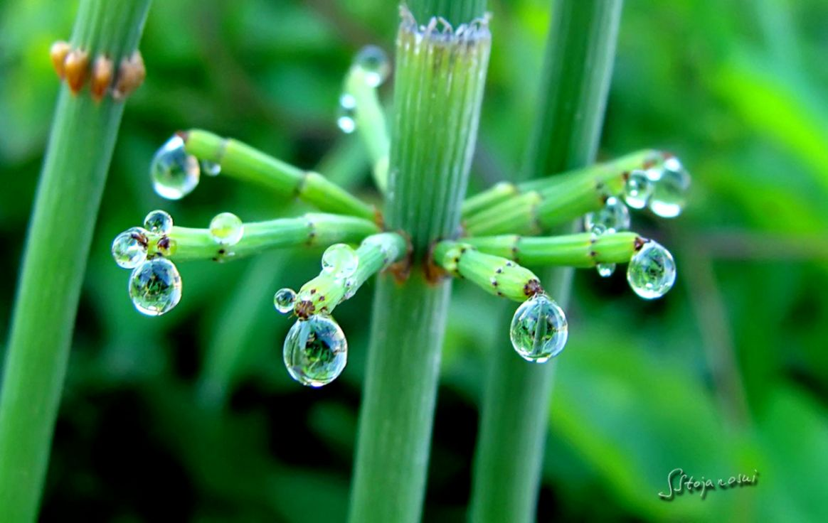 Photography Plants Rain Drops Dew Aesthetic Hd Wallpapers