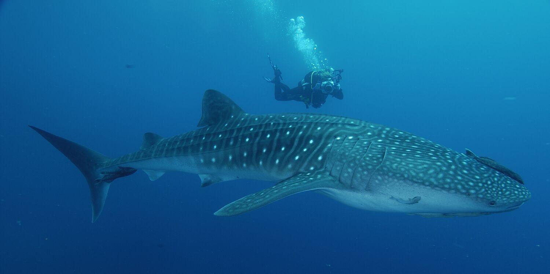 My Travel Background : 8 lieux où plonger dans le monde, Costa Rica