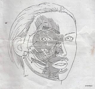 sketsa otot wajah manusia lengkap disertai petunjuk gambar