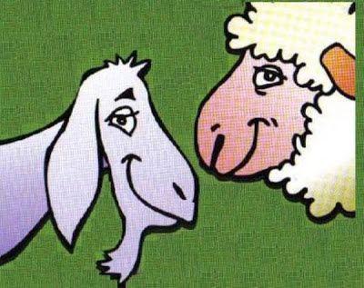 Ovejas y cabras. Caricatura de una cabra y una oveja. Ambas de perfil, mirándose de frente