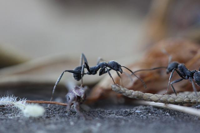Belajar Dari Karakter Semut