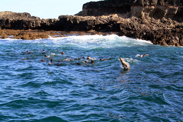 Seal Watching Cruise, Phillip Island
