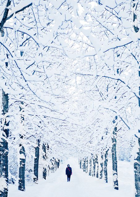 Five Places to See Snowfall in this Winter | reykjavik iceland winter