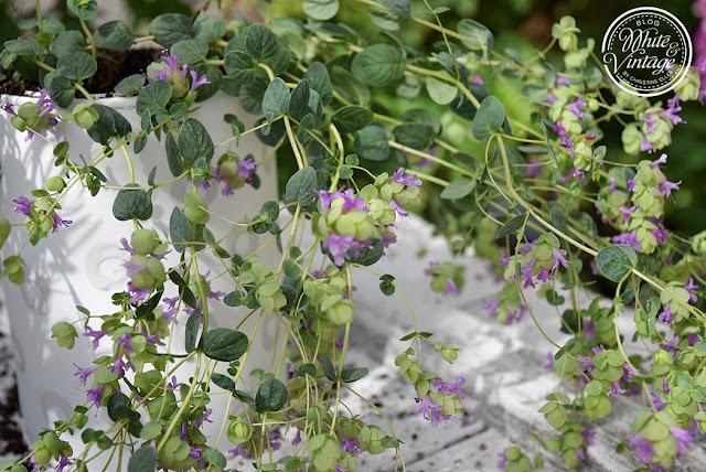 Kostengünstige Blumentöpfe selbermachen