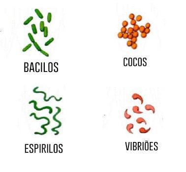 4-principais-formas-de-bacterias