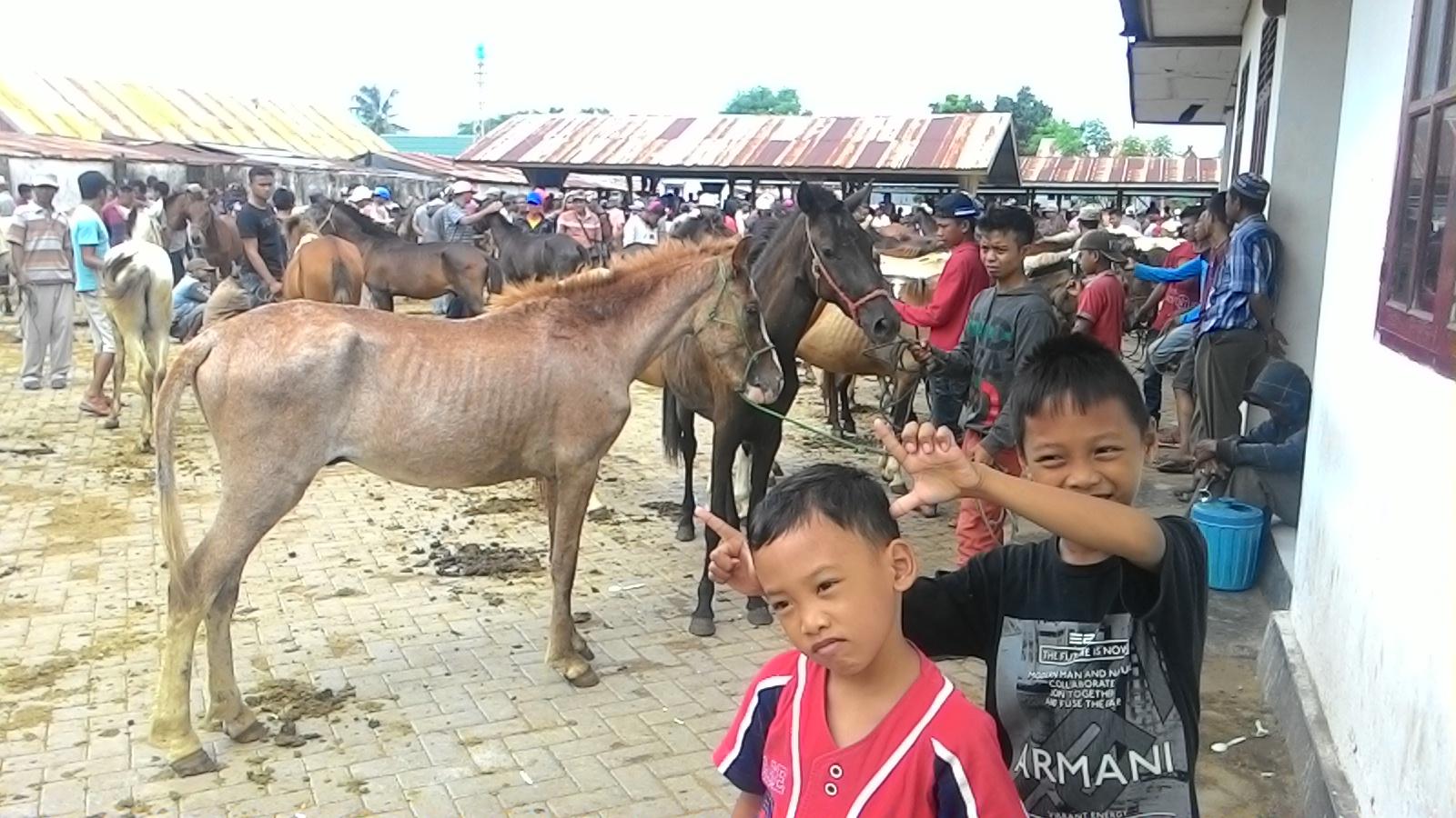 Menengok Pasar Kuda Di Jeneponto