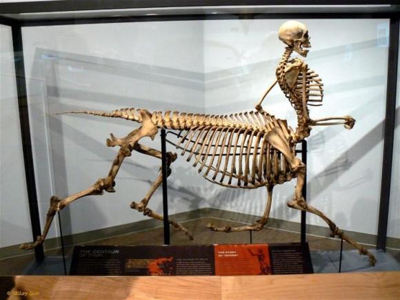 ケンタウロスの化石
