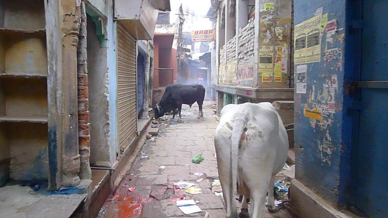 ashram opphold india